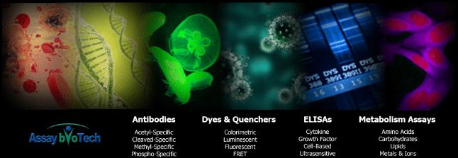 assay-biotech2