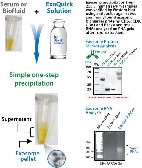 ExoQuick the Exosome Precipitation Reagent