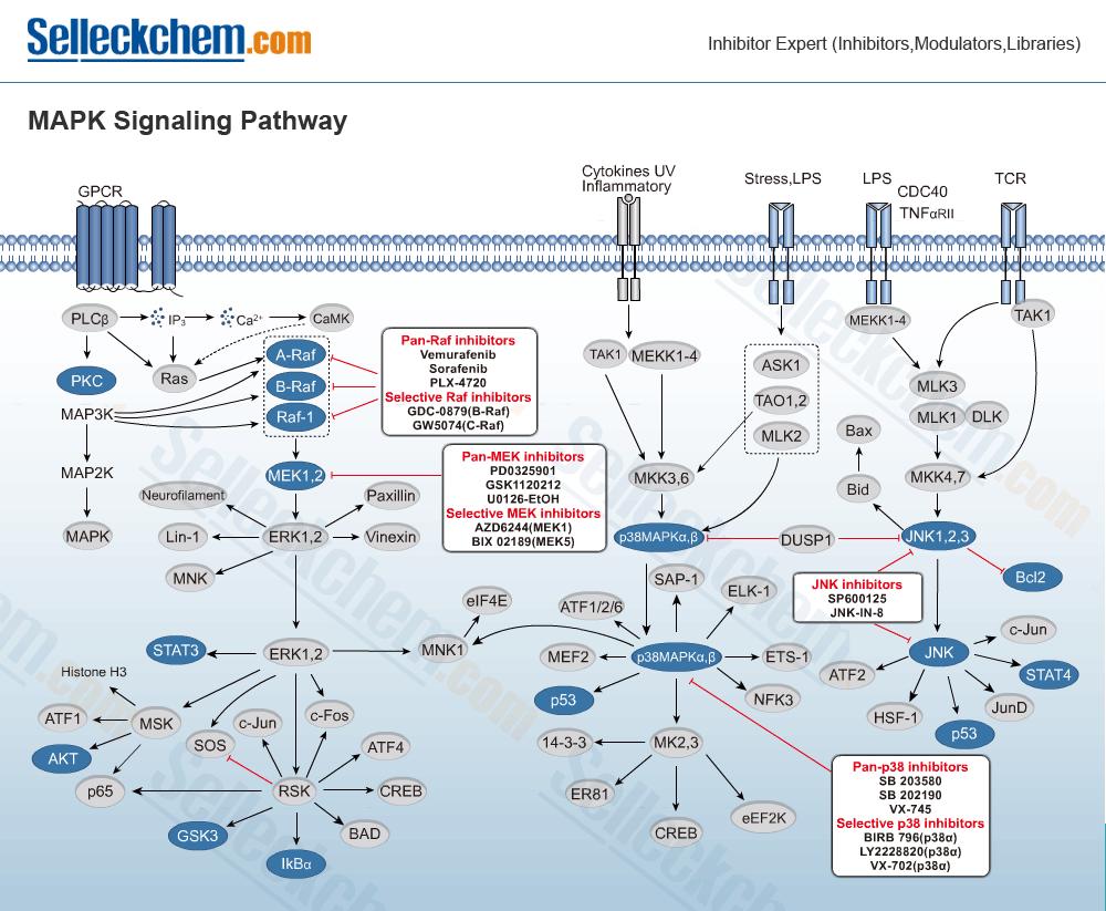 mapk-signaling-pathway-large