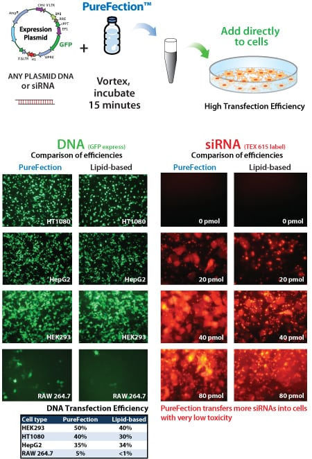 purefect_gfp__sirna_data