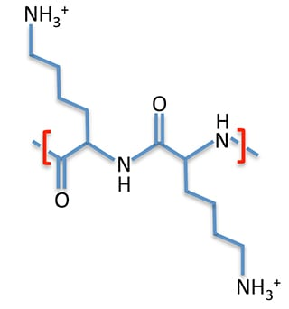 polylysine_molecule