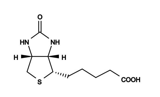 Biotin and Streptavidin offers