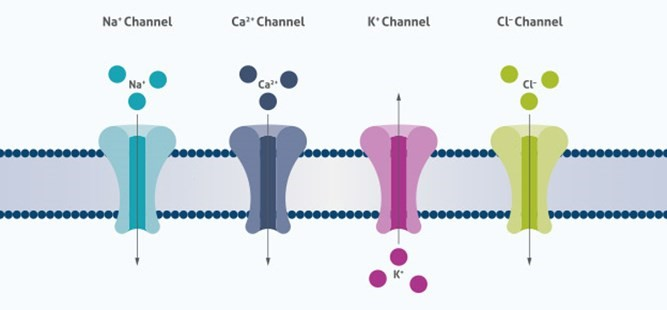 20% OFF Ion Channels Antibodies