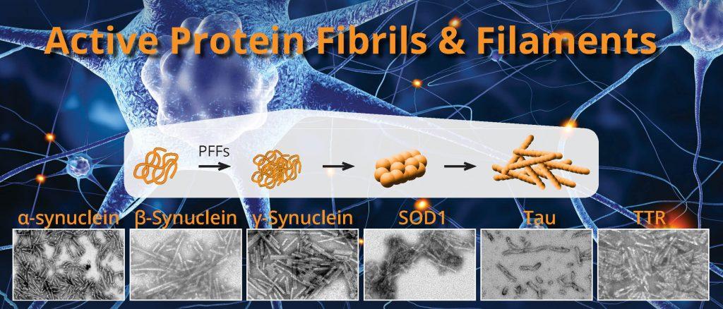 Active Pre-formed Fibrils for Neurodegeneration Research