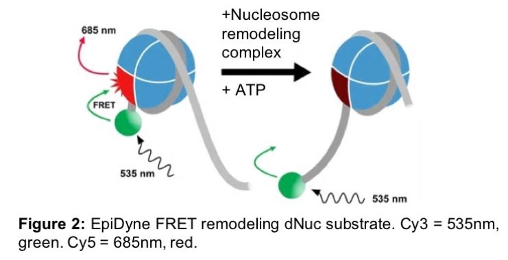 Exploring Chromatin Remodeling Substrates with Nucleosomes
