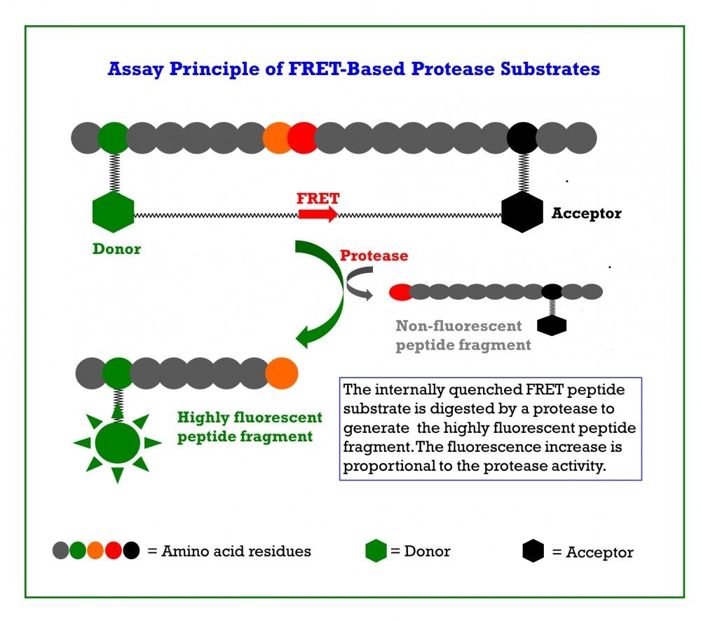 Research Solutions for Coronavirus – AAT Bioquest