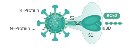 Research Solutions for Coronavirus – Sino Biological