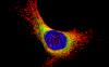 Cell NavigatorTM
